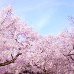 お花見ができる!?【埼玉】おすすめのキャンプ場!厳選3選