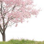 お花見ができる!?【千葉】おすすめのキャンプ場!厳選3選