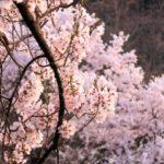 お花見ができる!?【茨城】おすすめのキャンプ場!厳選2選