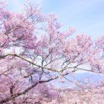 お花見ができる!?【栃木】おすすめのキャンプ場!厳選3選