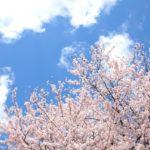 お花見ができる!【神奈川】おすすめのキャンプ場!厳選3選